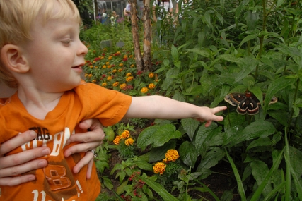 Mathias Attacking Butterflies at the Minnesota Zoo